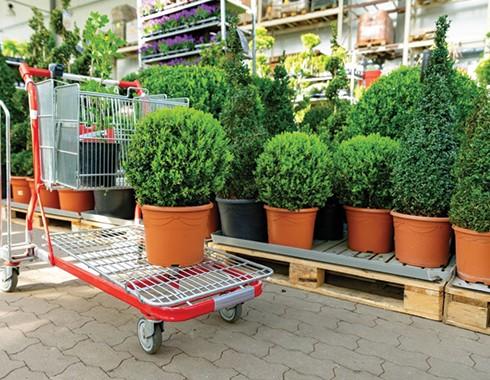 plant nursery selection at garden center